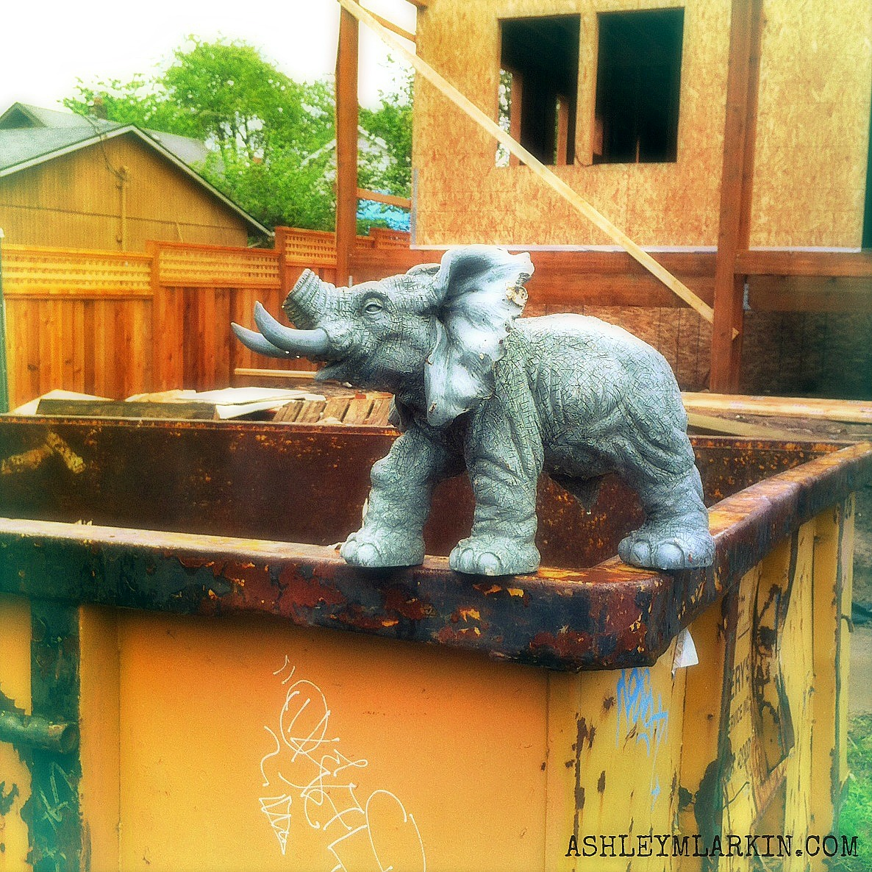 ElephantOnDumpster