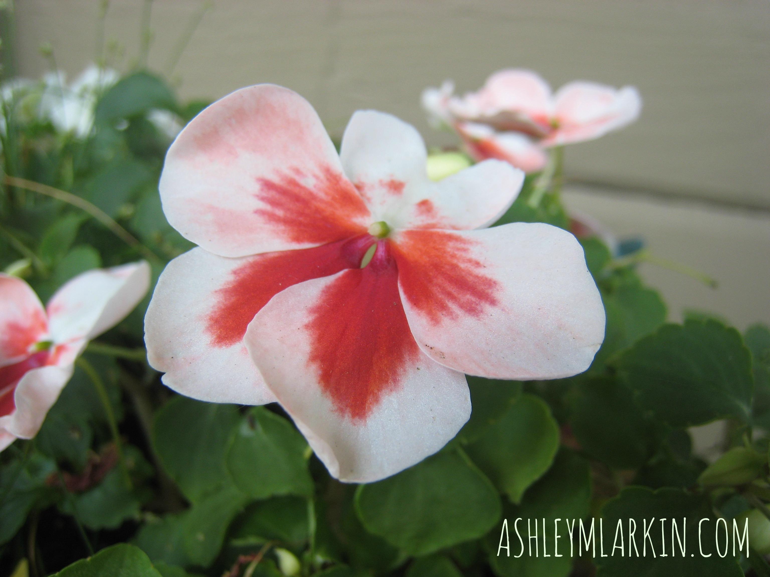 FlowersGrowingBySici
