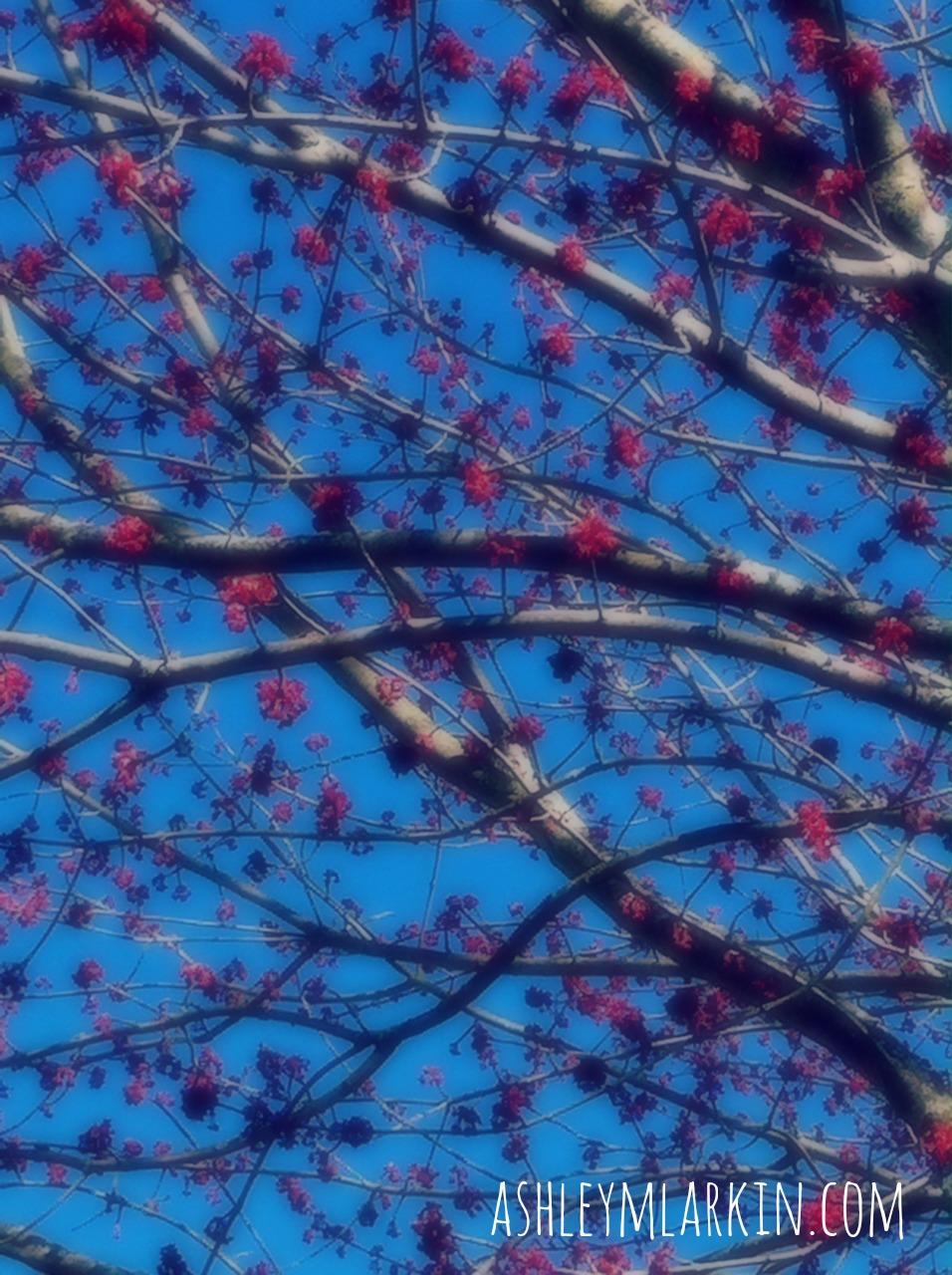 BlossomsOnBlue