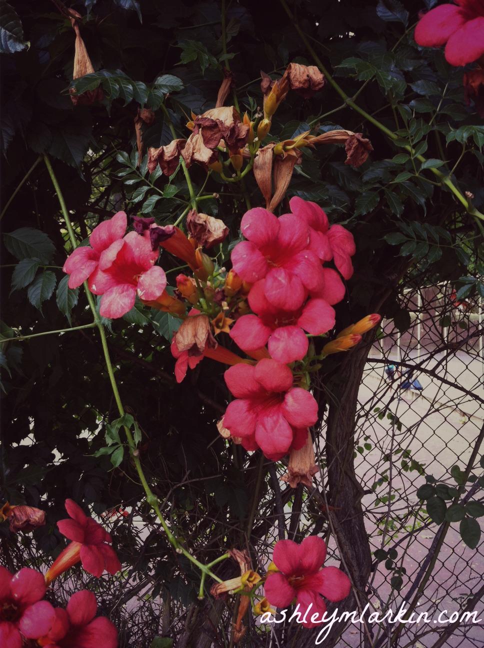 FlowersAtTheFence