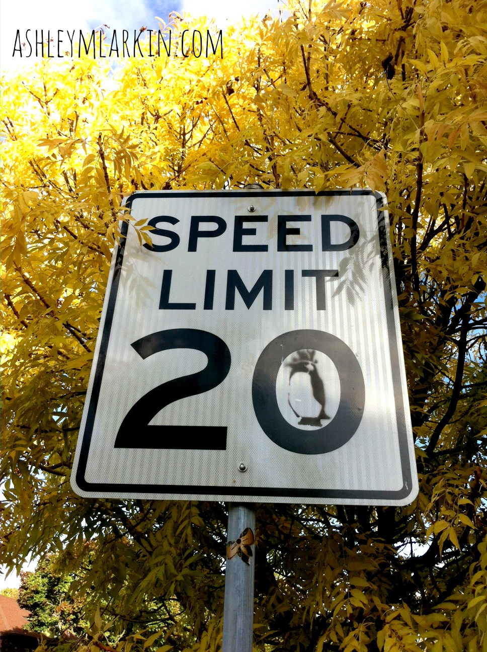 Speed20