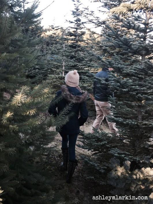 TreeHunt