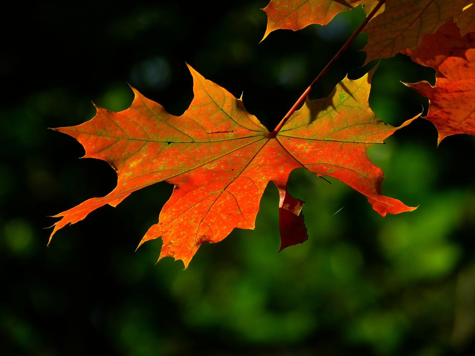 autumn-196566_1920